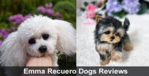 Emma Recuero Dogs Reviews 2020