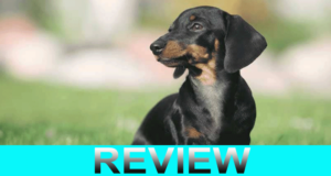 Courageous Dachshund Website Reviews
