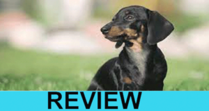Courageous Dachshund Website Review